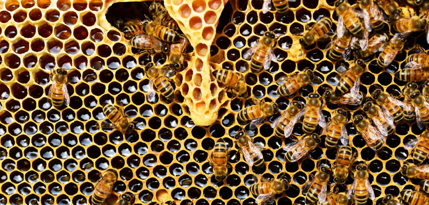 How do Bees make Honey? Step by Step Explanation