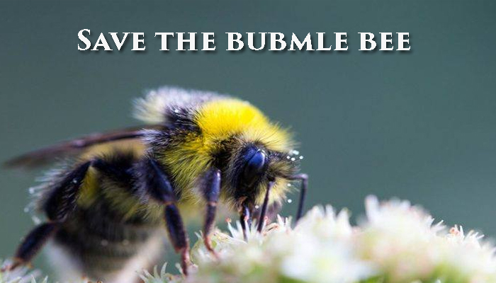 Saving a Bumble Bee that Cannot Fly